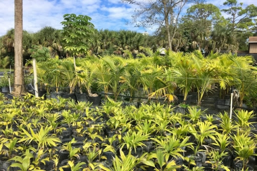evergreen-plant-nursery